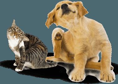 Best Flea Spray Treatment for Dogs