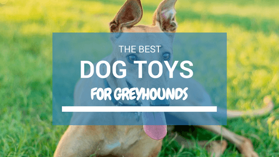 Toys that suit Large Sized Breeds like Greyhounds