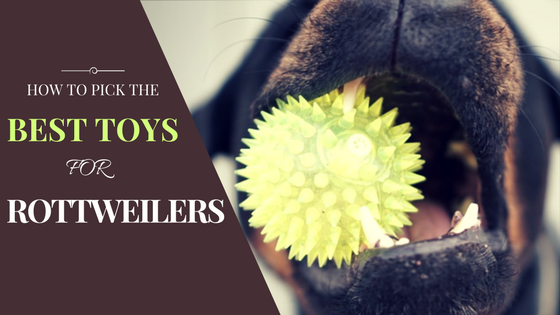 Best Rottie Dog Toys
