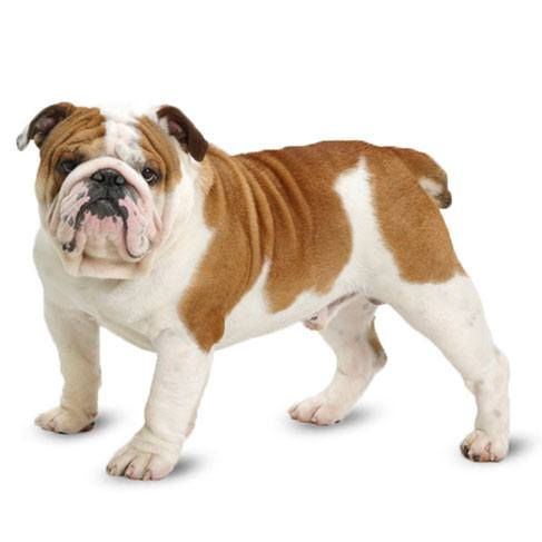 How To Pick The Best Toys For Bulldogs In 2019