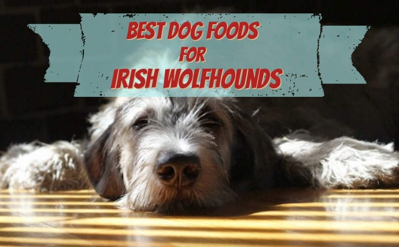 Irish Wolfhound Diet