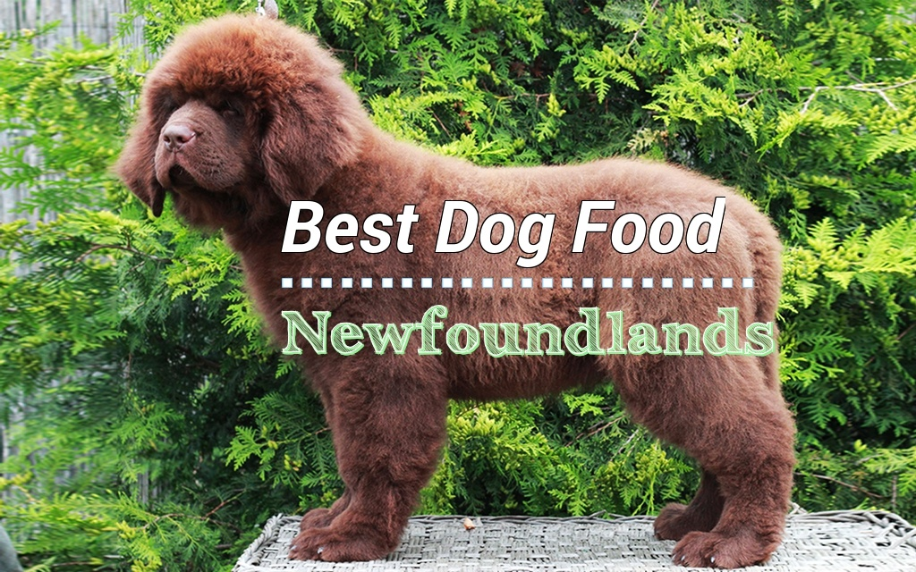 Newfoundlands Diet