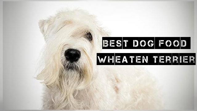 Foods to Feed a Wheaten Terrier