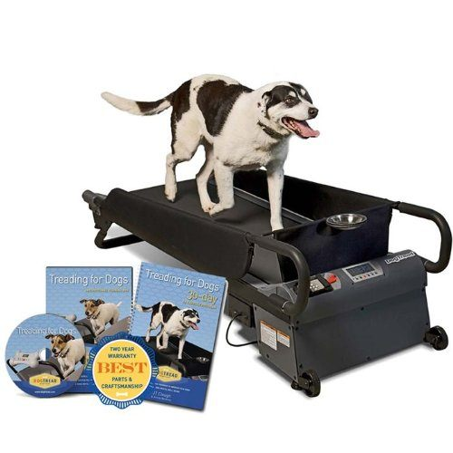 Best Exercise Treadmill for Dogs