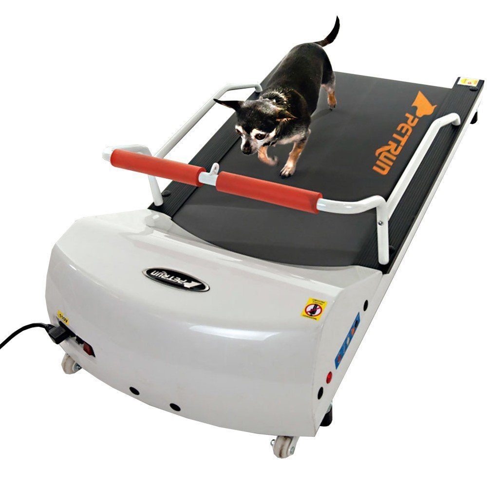 Best Small Dog Treadmill