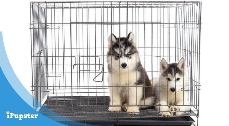 Strongest Dog Crate