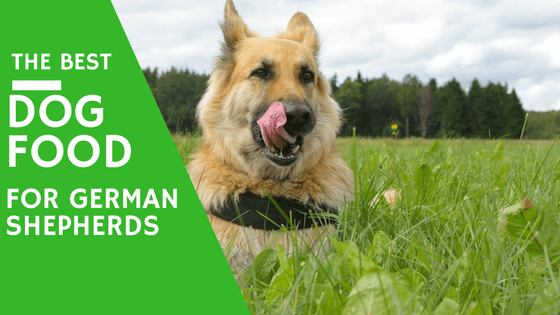Dog Food Recommendations For German Shepherds