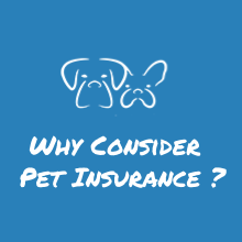 Why Consider Pet Insurance?