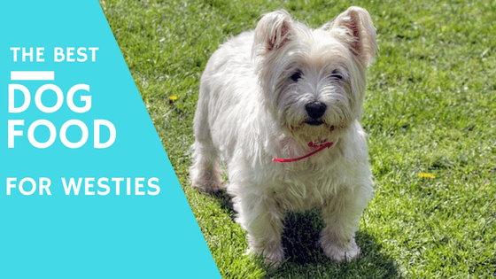 Best Dry Dog Food For West Highland White Terriers