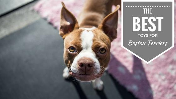 Boston Terriers Dog Toys