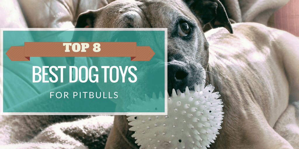 2019's Top 10 Indestructible Best Toys for Pit Bulls You