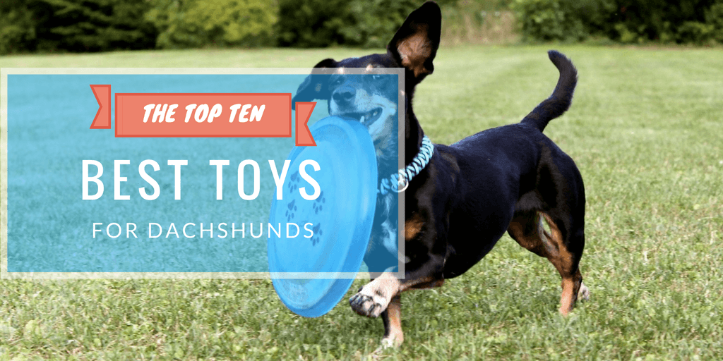 Pet Toys for Doxies
