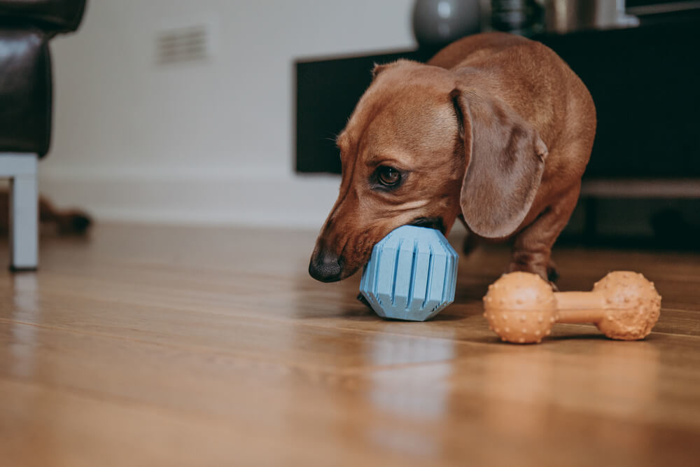 2020 S Top 10 Best Toys For Dachshunds