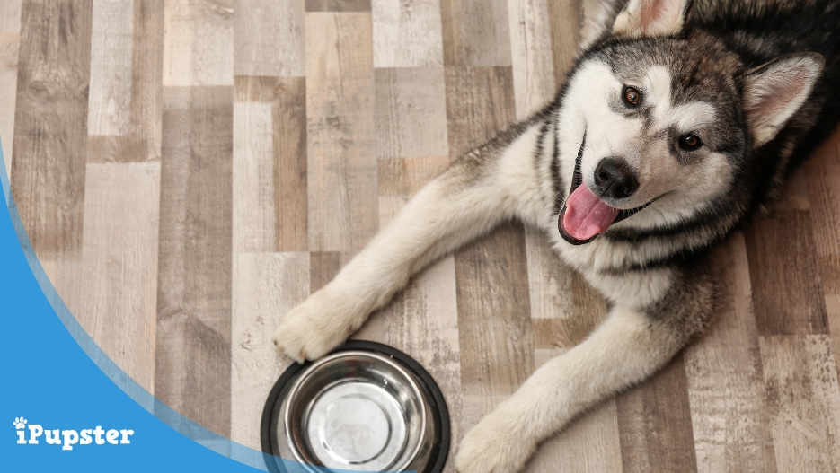Best Hypoallergenic Dog Foods