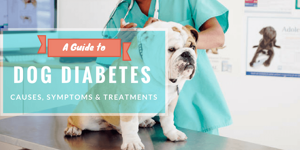 Dogs with Diabetes - Diet, Causes, Symptoms & Treatments