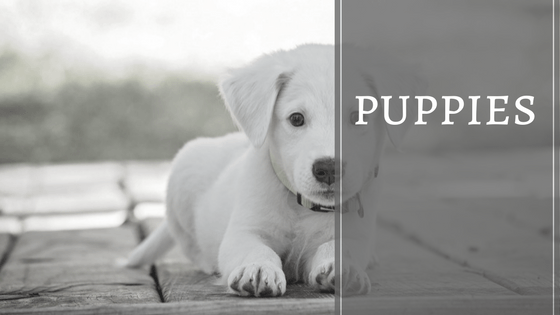 An archive of puppy related articles