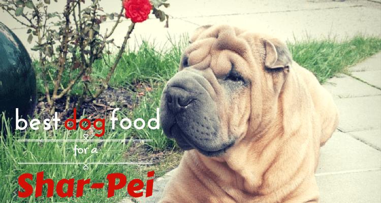 Shar Pei Dog Foods
