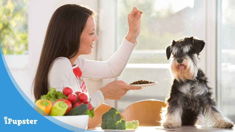Best Dog Food For A Mini Schnauzer