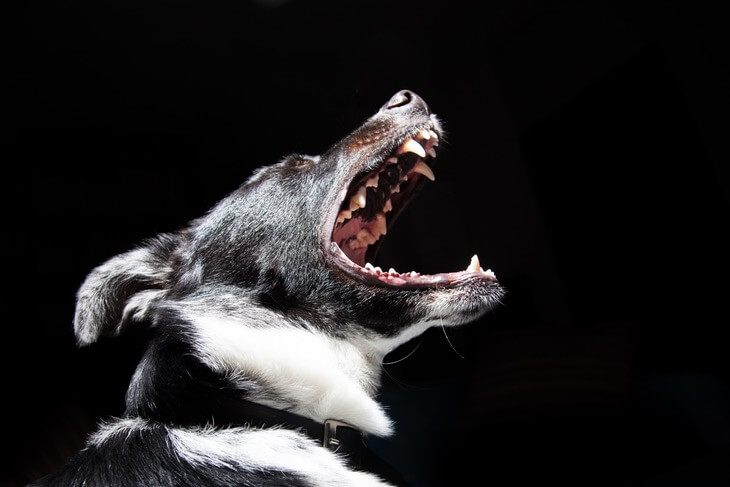 How To Stop Aggression in Dogs