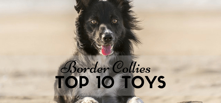 Got A Superactive Border Collie 10 Best Rated Fun Dog Toys To Keep