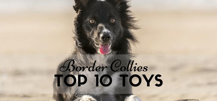 Durable Border Collies Dog Toys