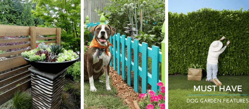 How To Protect Garden From Dogs