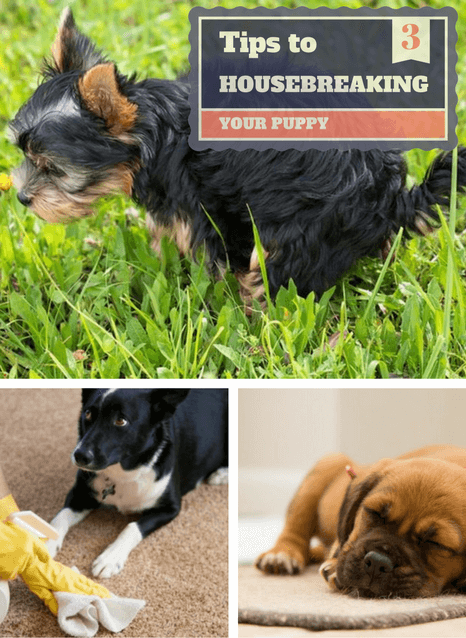 3 Easy To Follow Tips To Housebreaking A Puppy
