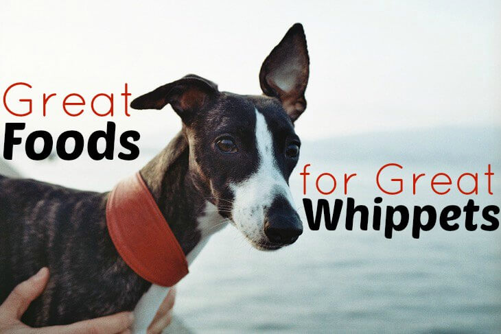 Best Food to feed Whippets