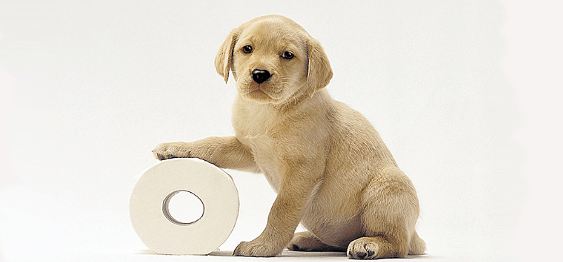 Puppy Potty Training Regression Tips