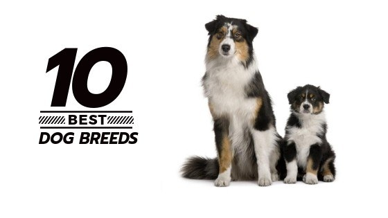 Adopting a pet? Read about 10 most popular breeds