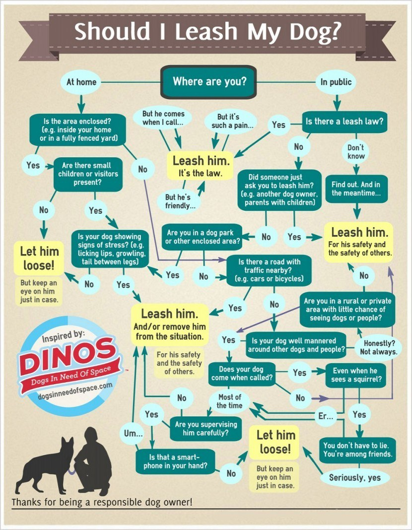 Flowchart depicting situations when you should and shouldn't walk your dog.