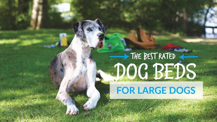 Best rated dog beds for large dogs