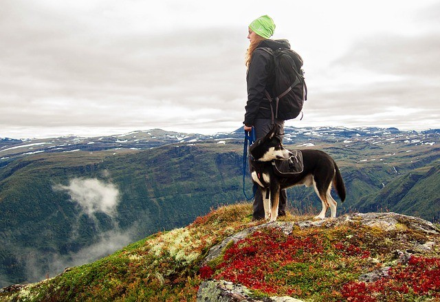 Pet parent and dog hiking in Norway