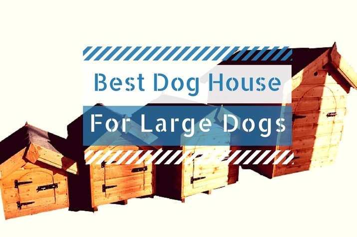 Large Dog Houses Reviews