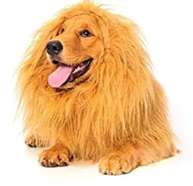 Halloween Lion Dog Costume