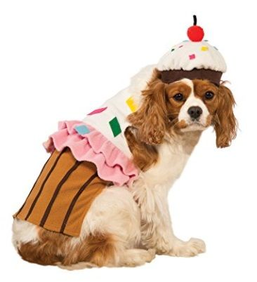 Best Adorable Dog Costume All Year Round