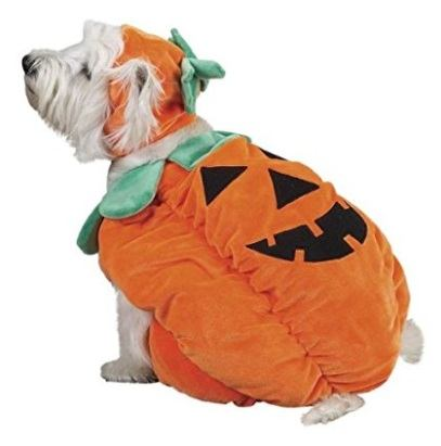 Pumpkin Outfit for Dogs