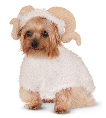 Funniest Dog Costume