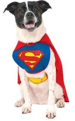 Best Fun Halloween Dog Costume