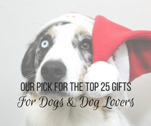List of 25 cool present ideas for dogs