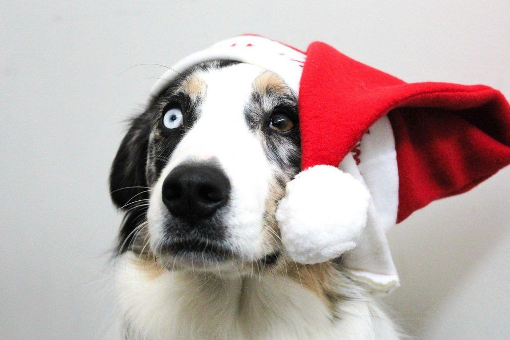 A compilation of 25 really cool and great Christmas present ideas for dogs and dog owners