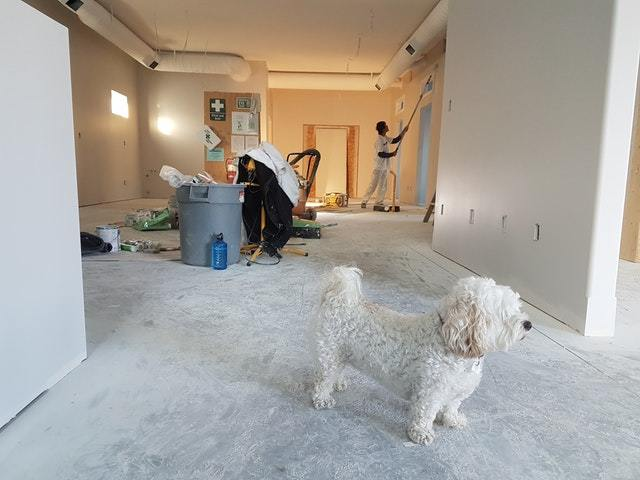 A confused dog looking around the new home apartment can be a big change
