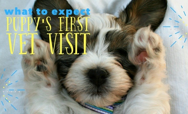 Cost and Age of First Vet Visit for Puppies
