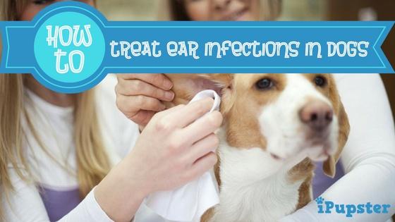 Homemade dog ear cleaners
