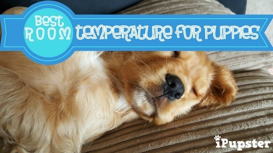 Is it too hot or too cold for a puppy to sleep?