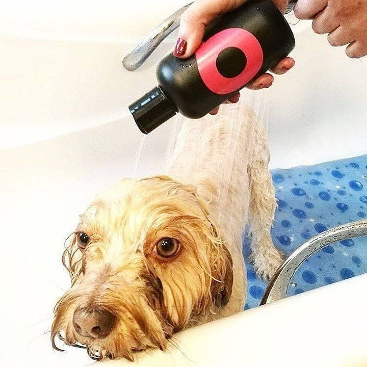 Dog getting shampooed to eliminate dander and allergens