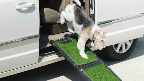 Dog Ramps to Help Prevent Injuries to Joints