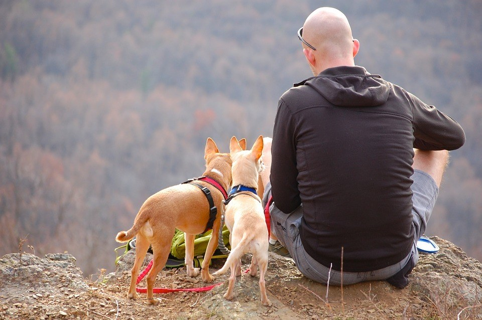 Camping Pet Travel Hiking Backpacking