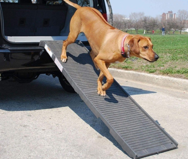 Dog ramp for putting a big dog into my truck