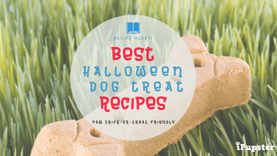 Nutritious Halloween or Fall Dog Treat Recipes
